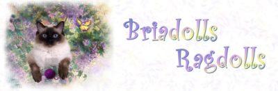 Briadolls Ragdolls